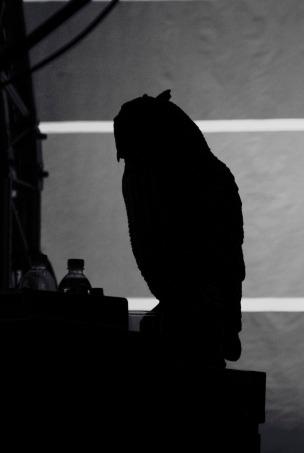 mogwai owl tempodrom 2 by katja avant-hard